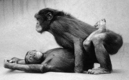"""اللذة الجنسية شريك حياتك.."""" للمتزوجين+18"""" bonobo.jpg"""